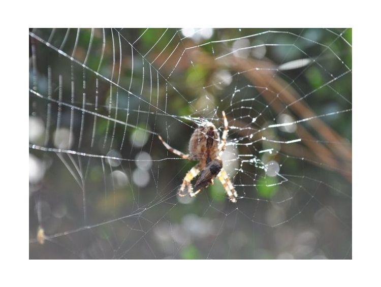 Открытка - Spiderweb №1100