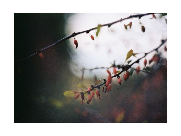 Открытка - Autumn life №1093