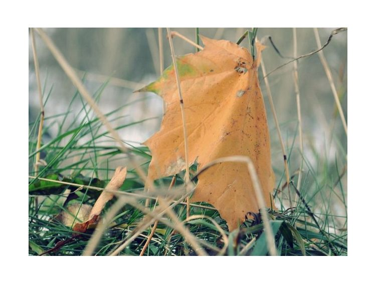 Открытка - Autumn leave №1103