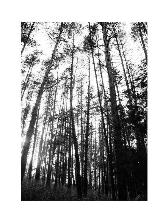 Открытка - Темный лес №1138