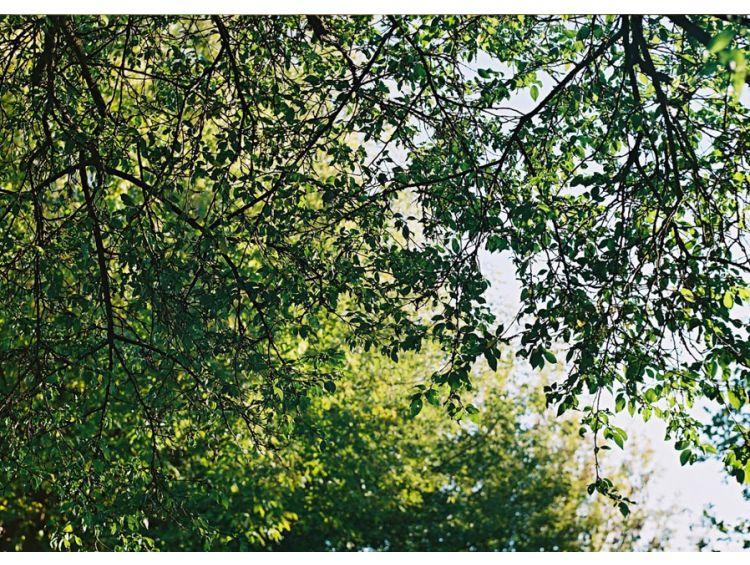 Открытка - Солнце в ветвях №1146