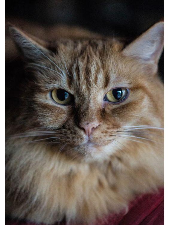 Открытка - Важный кот №1161