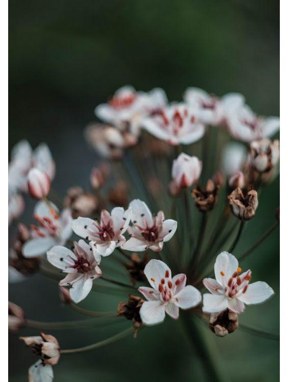 Открытка - Запах весны №1163