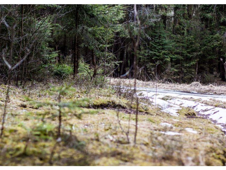 Открытка - Весенний лес №1168