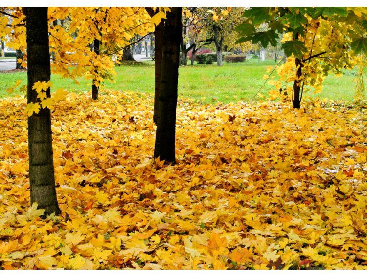 Открытка - Золотая осень №1170