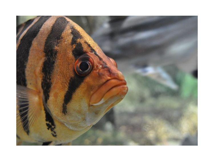 Открытка - Nemo №1097