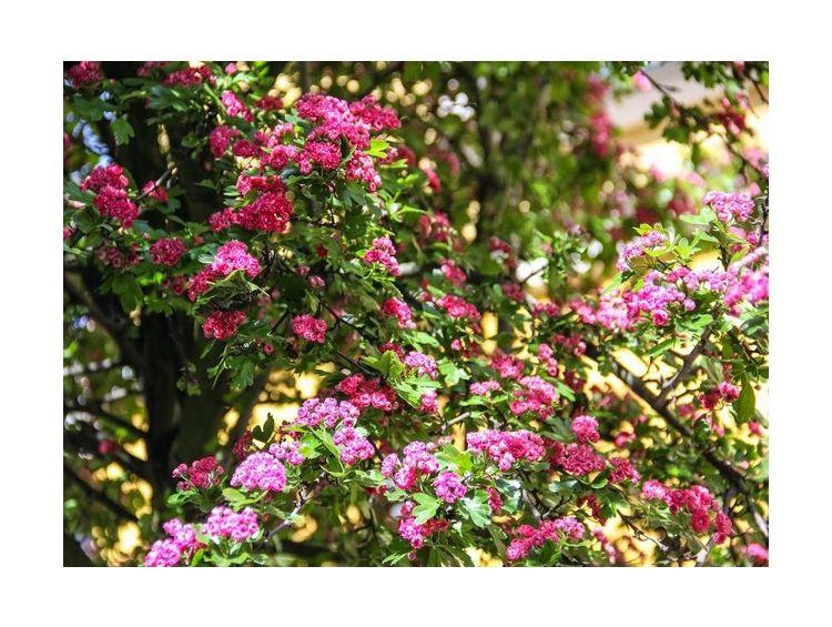 Открытка - Цветочное дерево №978