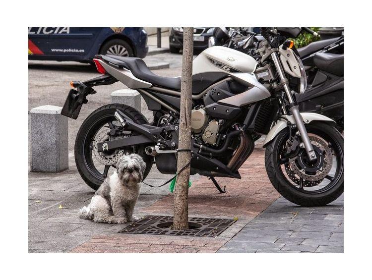 Открытка - Верный пес №977